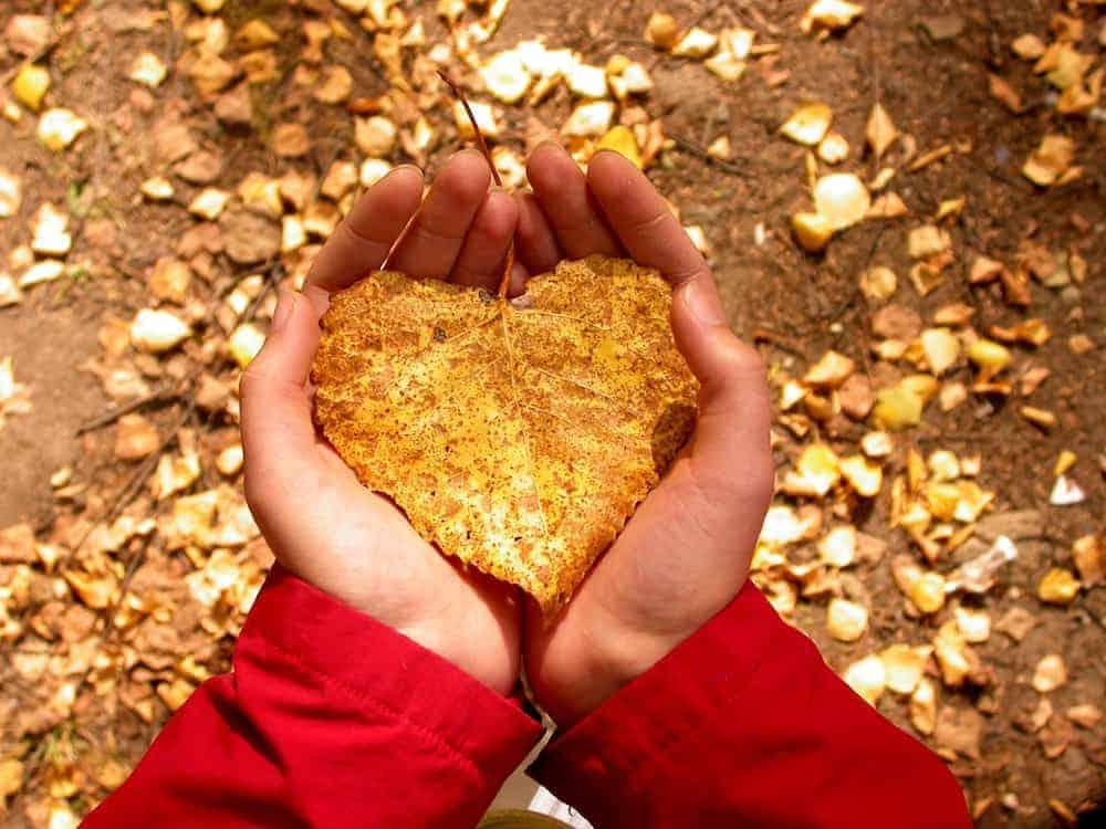 Lebenszahl 6: Blatt in Herzform in Händen haltend - Herbst