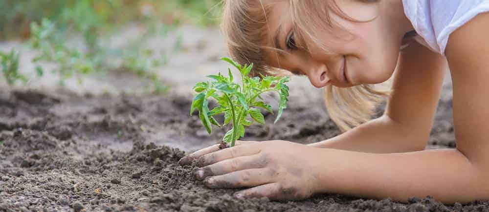 Lebenszahl 33/6 Kinder: Kind setzt Pflanze ein